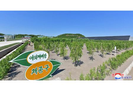 여러 도에 튼튼한 나무모생산토대 조성