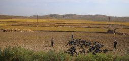 Following dip, North Korea cereals imports increased in April