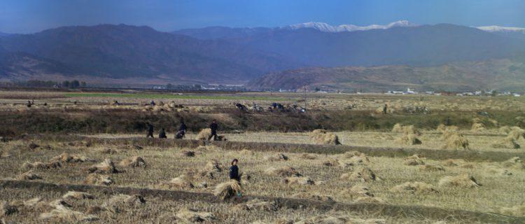 North Korean food imports climb in June: KITA