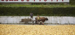 How serious is the food situation in North Korea? The view from the corn market