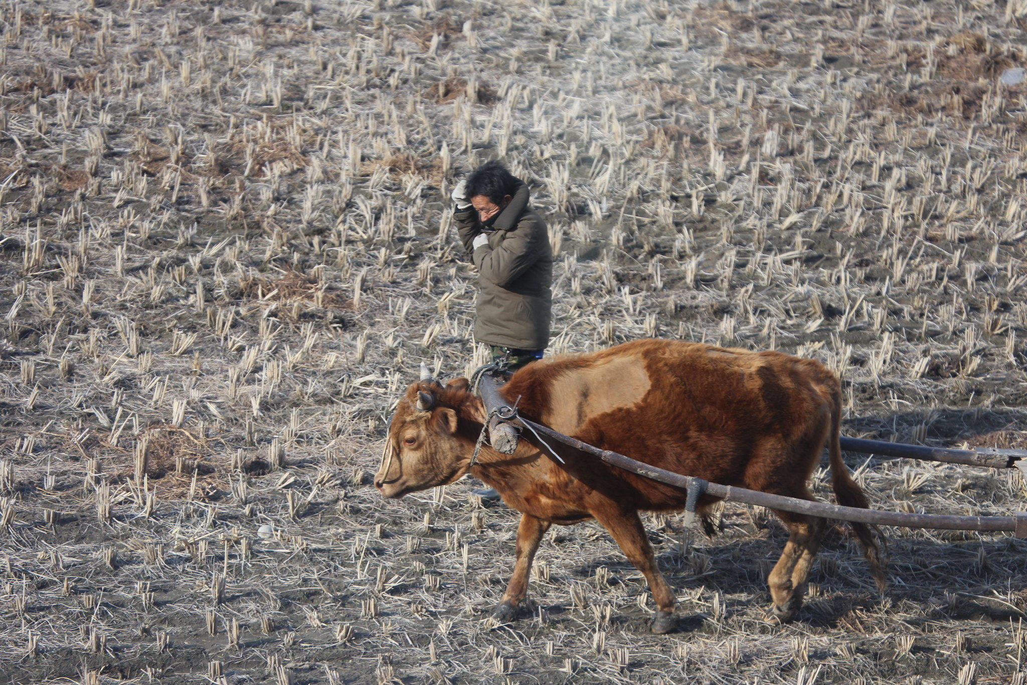 North Korea is giving more power to farmers, but not without helping the elite
