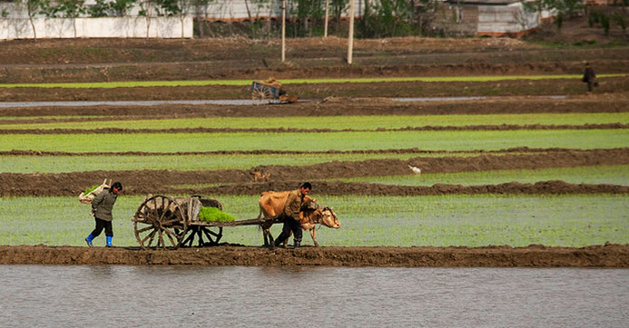 Workers in a field in North Korea. Picture: Eric Lafforgue
