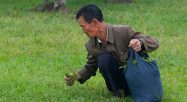 Collecting herbs - Wonsan North Korea | Picture: E. Lafforgue