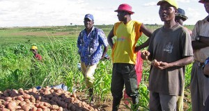 In Angola, potential for North Korean investment in agriculture