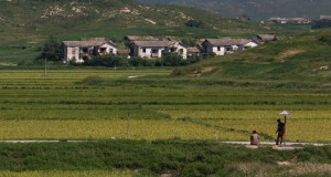 Despite drought, N. Korean cereal imports lower than 2014
