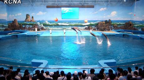 Kim Jong-un Brings Dolphins to Pyongyang