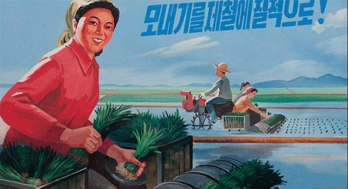 Let them eat rice: North Korea's public distribution system
