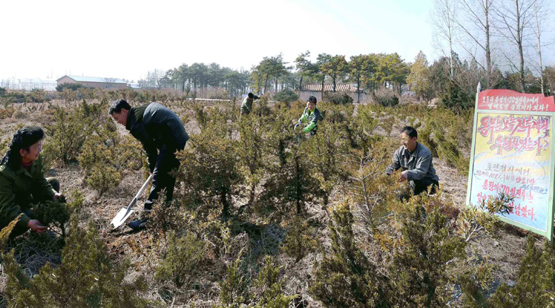 Exclusive: N.Korean warning threatens deforesters with execution