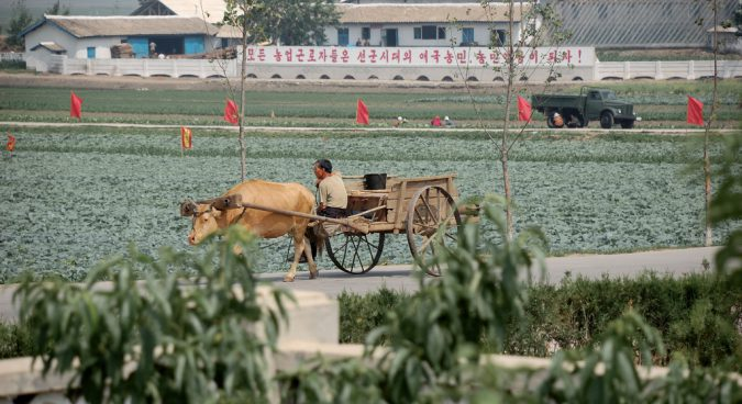 Why farmers may be sowing the seeds of North Korea's economic reform