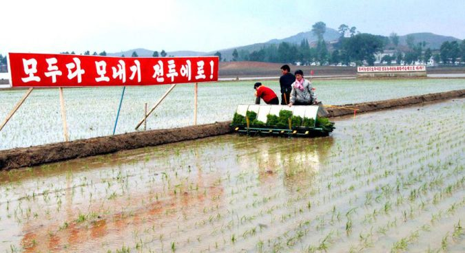 "N. Korea calls for bumper ""nuclear bomb"" rice harvest in response to sanctions"