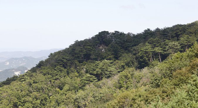 Seoul to launch project assessing N. Korean deforestation, environmental damage