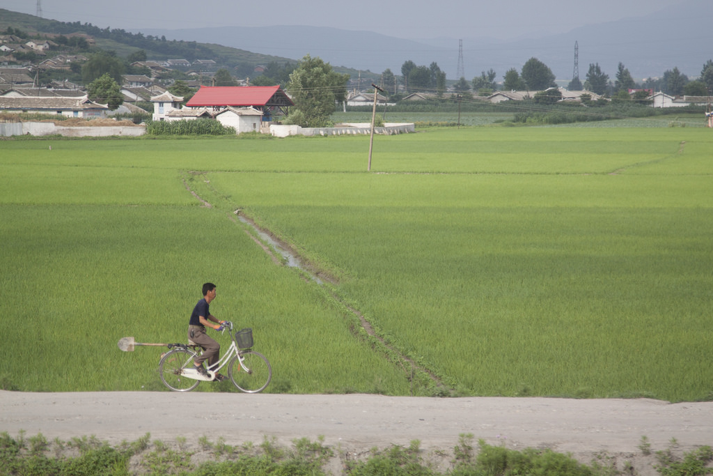 Food insecurity 'expected to increase' in North Korea this year: FAO