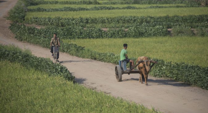 10.1 million people in North Korea food insecure: FAO, WFP