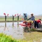 Severe drought in North Korea cut expected harvest output in half: IFRC