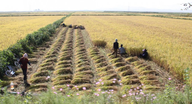Sowing the seeds of improving agriculture: Quakers in North Korea