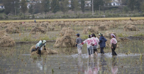 UN releases emergency funding for cyclone damage in North Korea