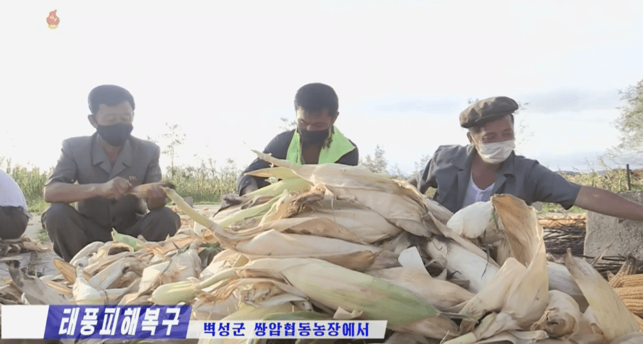 Food shortages expected after wettest summer in North Korea for decades: report
