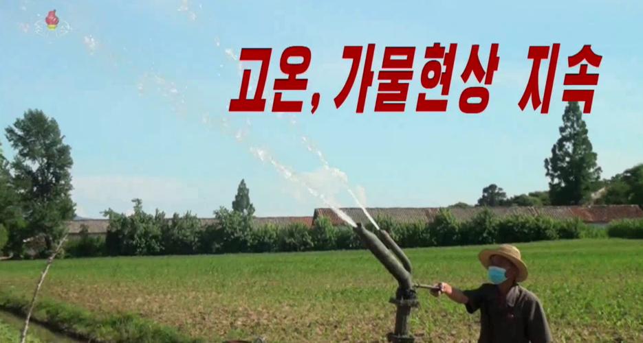 Blistering summer heat wave is killing North Korean crops: state media