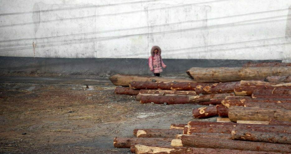 Siberian jackpot: When North Koreans paid bribes for Soviet logging jobs